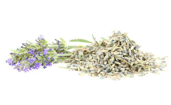 Fresh and dry lavender